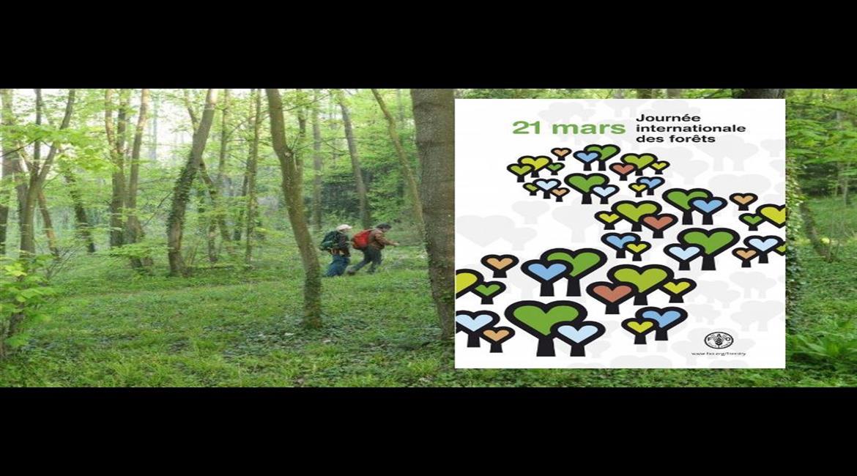 Journée internationale des forêts 21 mars 2019,